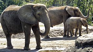 Photo: Up Close With Elephants at the Pittsburgh Zoo