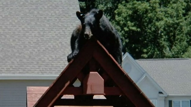 VIDEO: Bear Hangs Out in Family?s Playground