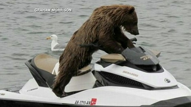 VIDEO: Bear Jumps On a Jet Ski