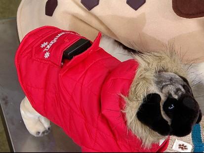 VIDEO: Winterize Your Pets