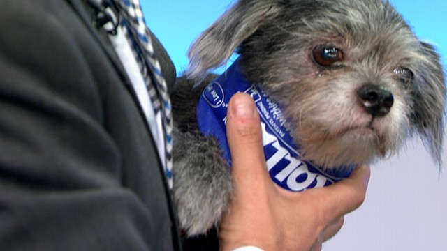 VIDEO: Marty Becker reveals products designed to protect pets from heat, humidity.