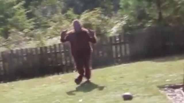 VIDEO: Airman Dressed as Bigfoot Scares Kids in Backyard