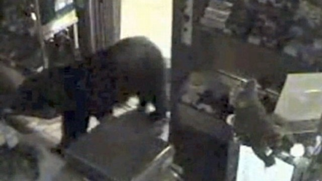 VIDEO: Baby Bear Breaks Into Candy Store