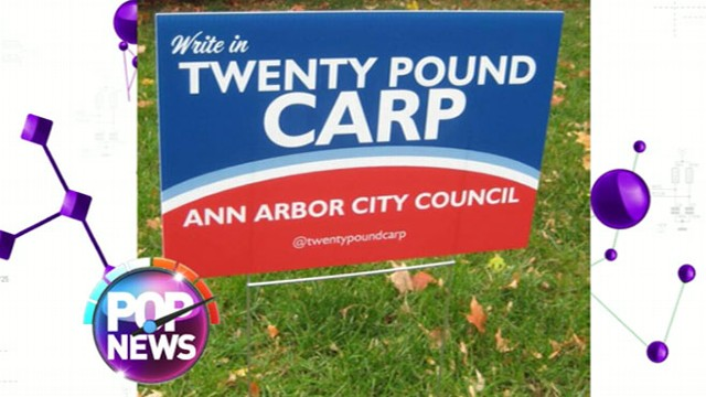 VIDEO: Carp Running for City Council
