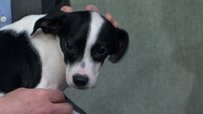 VIDEO: Oklahoma terrier puppy survives two attempts to euthanize him.