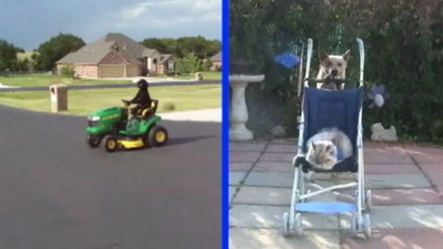 "VIDEO: Mower-riding, scooter-pushing canines compete to be top dog in ""GMAs"" contest."
