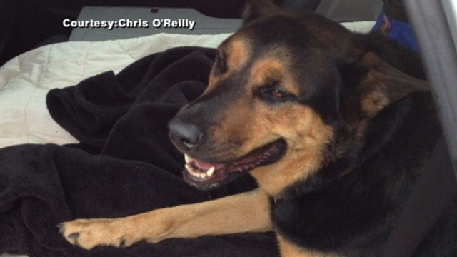VIDEO: The decision on where the abandoned dog will ultimately live could take months.