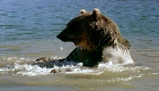 """VIDEO: Chris Palmers book """"Shooting in the Wild"""" exposes secrets used in nature films."""