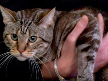 VIDEO: Cat falls many stories