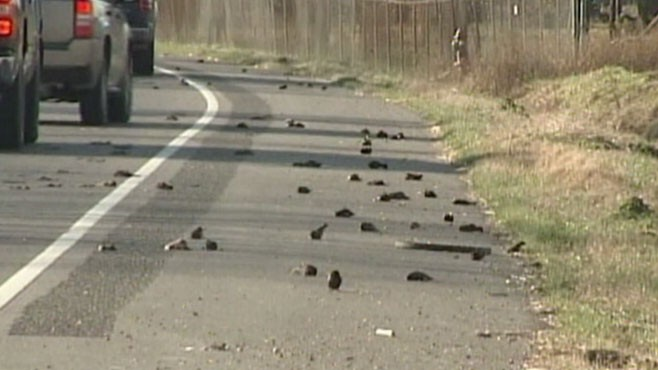 VIDEO: Arkansas, Kentucky and Louisiana report hundreds of bird deaths.