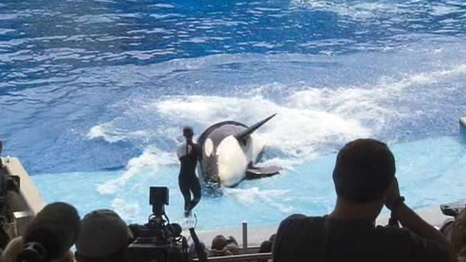 VIDEO: SeaWorld whale Tilikum to resume act with new safety measures.