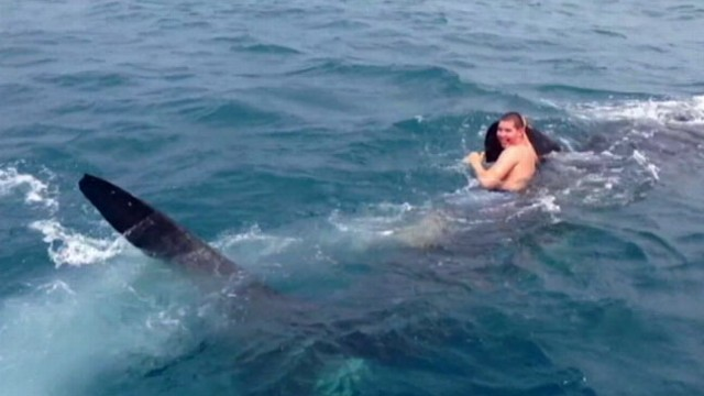 VIDEO: A video of a teen grabbing on to whale sharks dorsal fin and going for a ride has gone viral.