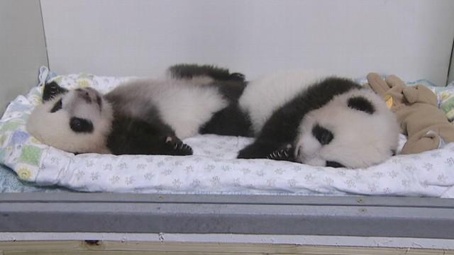 VIDEO: Name Baby Twin Pandas
