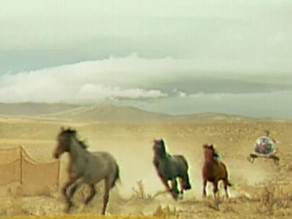 VIDEO: Mustangs are Being Rounded Up
