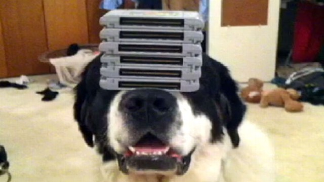 VIDEO: A wastebasket, a pot, pizza -- this dog can balance anything on its nose.