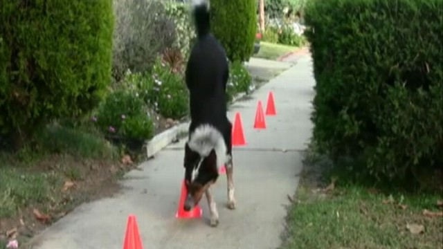 VIDEO: Jumpy is Multi Talented Dog; Dog Wants Indoor Pool