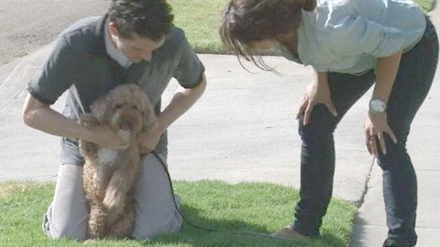 VIDEO: American Kennel Club reports dog theft cases jumped almost 50 percent this year.