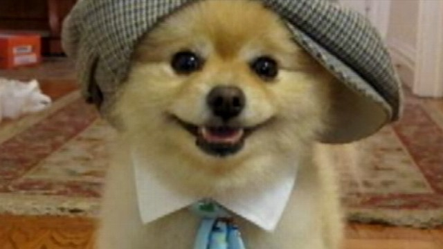 VIDEO: Owners fight over who owns the pup and his money-making website.