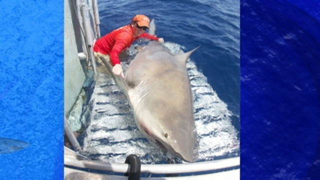 VIDEO: Florida scientist couldnt believe the size of the shark he reeled in.