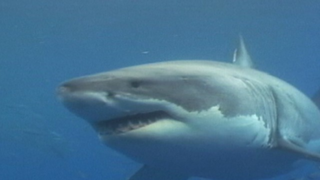 VIDEO: Its unusual to have shark warnings on both coasts so early in the summer.