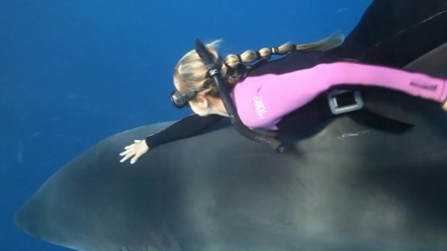 VIDEO: Woman Swims With Sharks