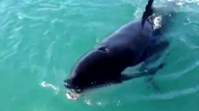 VIDEO: Fishermen Get Whale of a Surprise