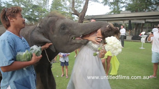 VIDEO: Elephant Kisses Bridesmaid on Wedding Day