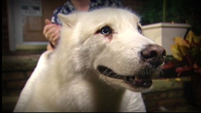 VIDEO: Zander the dog travels over two miles to find the location of his master.