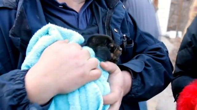 VIDEO: Michigan Humane Society saves a one-month-old puppy, who wandered into a pipe.