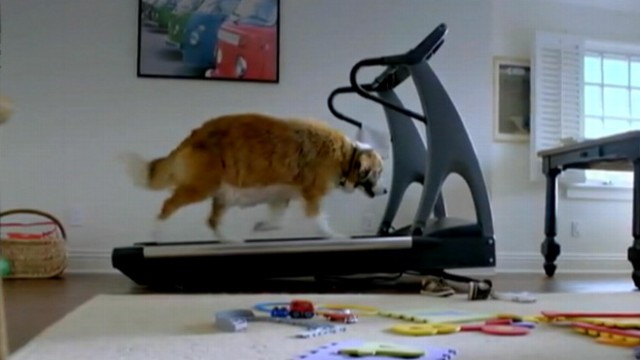 "VIDEO: VW commercial ""The Dog Strikes Back"" includes Bolt the dog getting into shape."