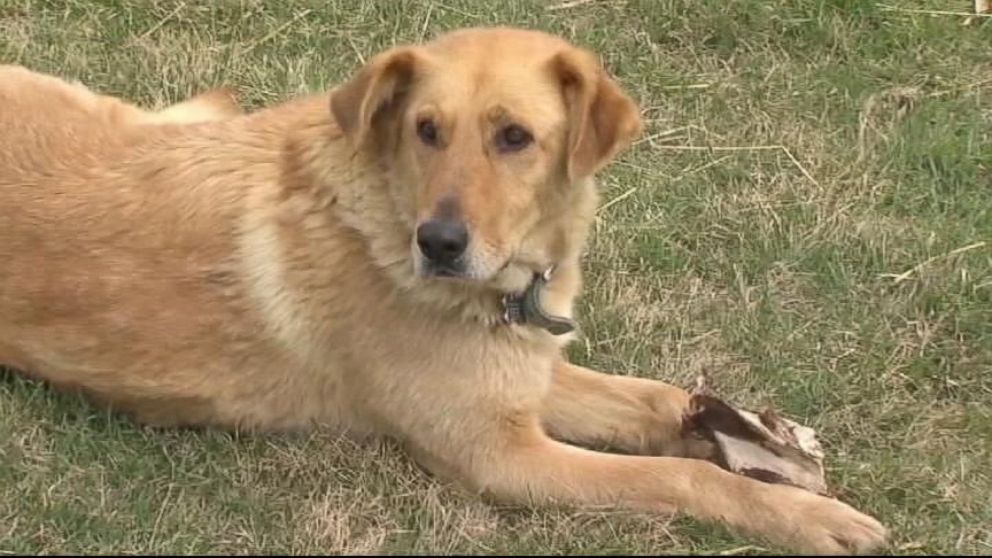 VIDEO: A three-year-old boy is saved by his dog.