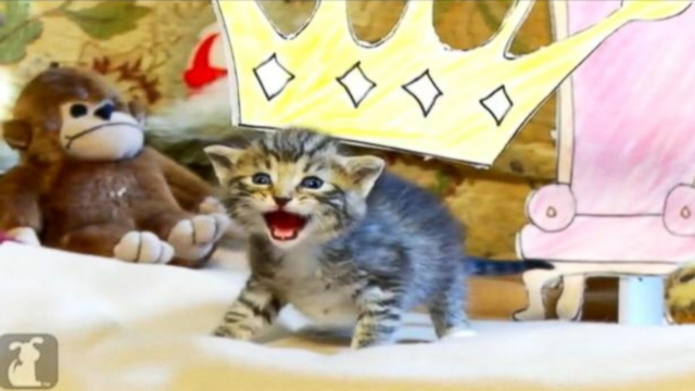 VIDEO: Young felines re-create the 1994 animated film with adorable results.