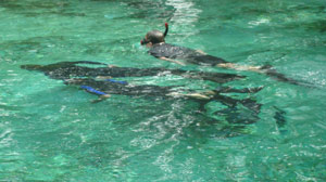 Swimming With Sea-Cows: Living a Dream and Honoring a Legacy