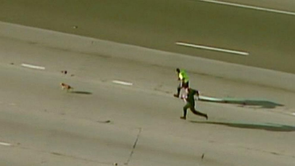 Police officers gave chase but the pup eventually ran off the Sacramento highway.
