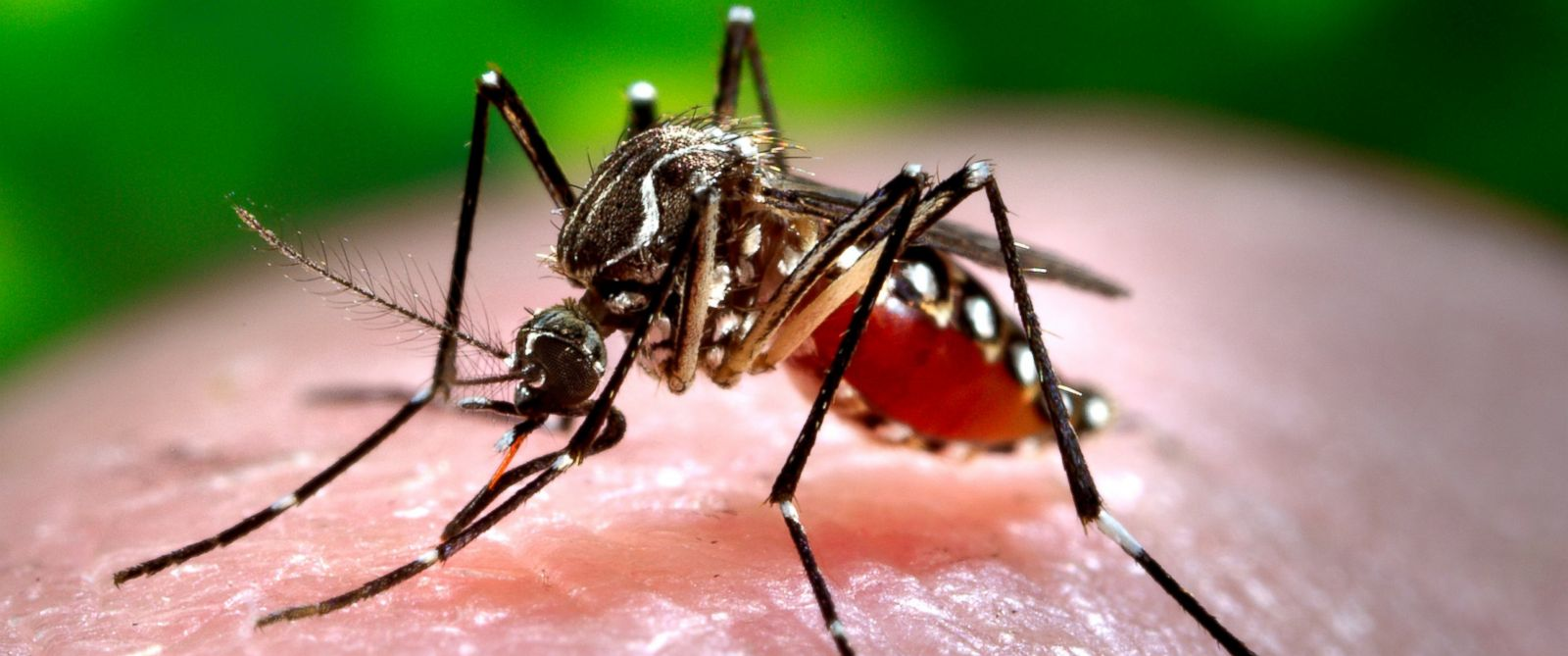 PHOTO: The Zika virus is spread through the Aedes species of mosquito and officials are confirmed it has caused birth defects in children.