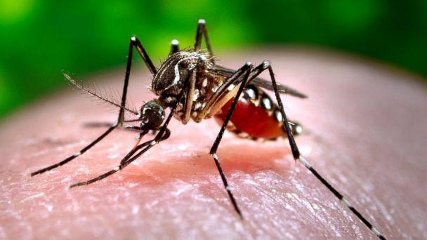 http://a.abcnews.go.com/images/Health/AP_Aedes_Mosquito_MEM_160115_16x9_608.jpg