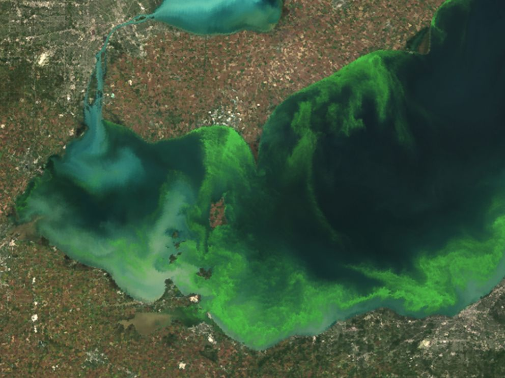 PHOTO: This satellite image provided by NOAA shows the algae bloom on Lake Erie in 2011.