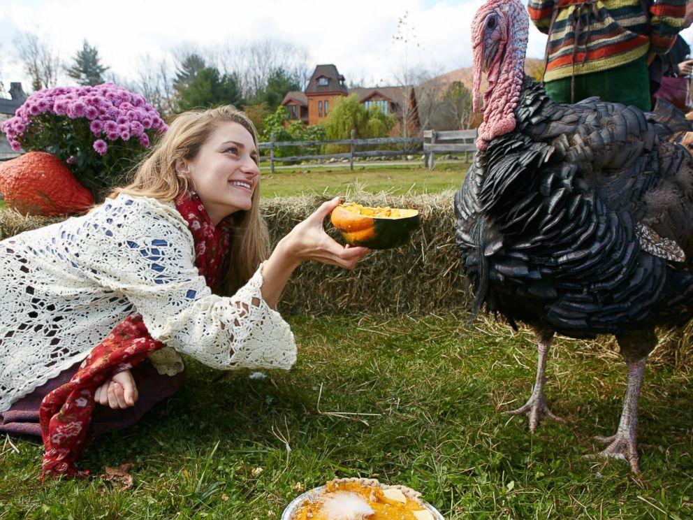 PHOTO: Turkey rescued by the Woodstock Farm Animal Sanctuary in Woodstock, New York.