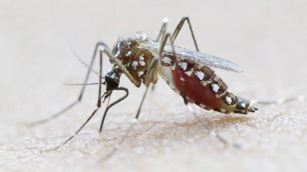 http://a.abcnews.go.com/images/Health/RT_Zika_Mosquito_ER_160203_16x9_608.jpg