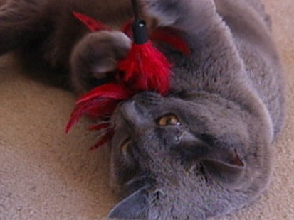 VIDEO: Cat diagnosed with H1N1 flu