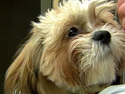VIDEO: Health Insurance for Your Pets