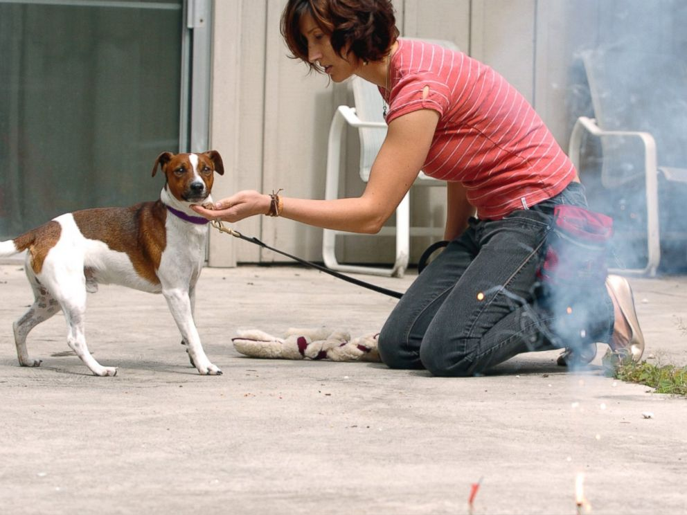 PHOTO: A dog trainer works to desensitize a puppy to fireworks in Portland, Oregon in 2008.