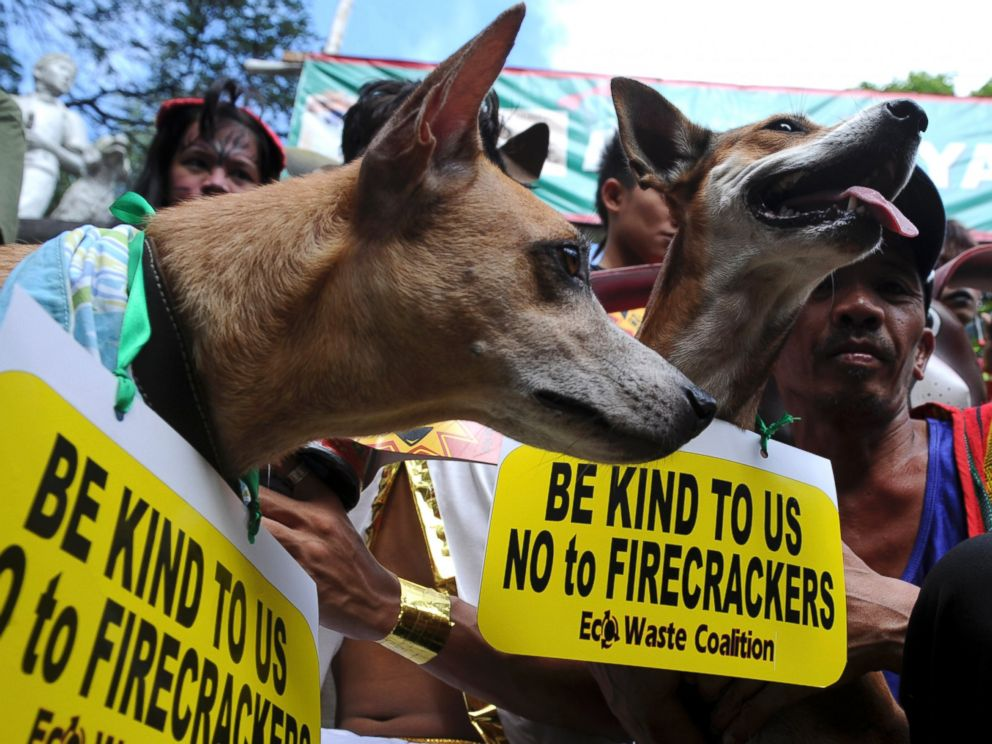 PHOTO: Animal rights advocates with their pets join in a campaign calling the public not to use firecrackers during the New Year celebration in the Philippines on Dec. 29, 2012.