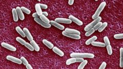 PHOTO: E. coli is seen in an undated image.