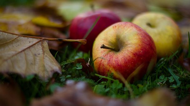 PHOTO: Apples are seen in this undated stock image.