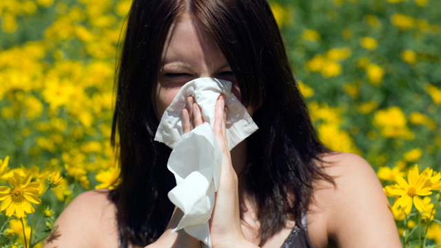 PHOTO: Dont wait until youre sneezing to sniff out antiallergy aid.