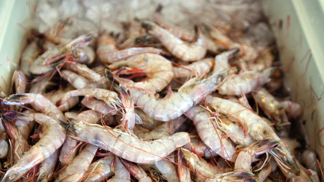 PHOTO: White shrimp sit over ice at a seafood market where fresh Gulf Coast seafood is sold daily in Westwego, LA on March 5, 2012.