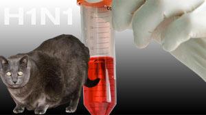 H1N1 Cat