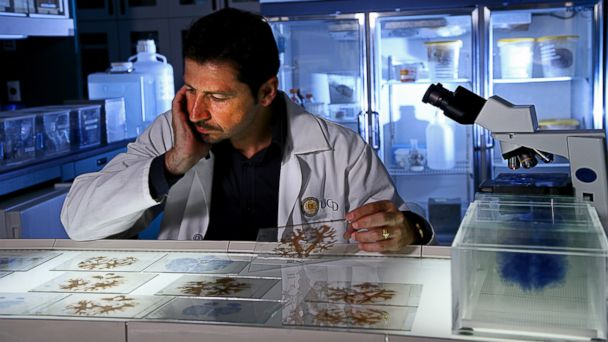 "PHOTO: Dr. Jacopo Annese, director of the Brain Observatory at University of California San Diego, examines slides of Molaisons brain. A 3-D digitized version of Molaisons brain was uploaded into an online ""Atlas"" for other researchers."