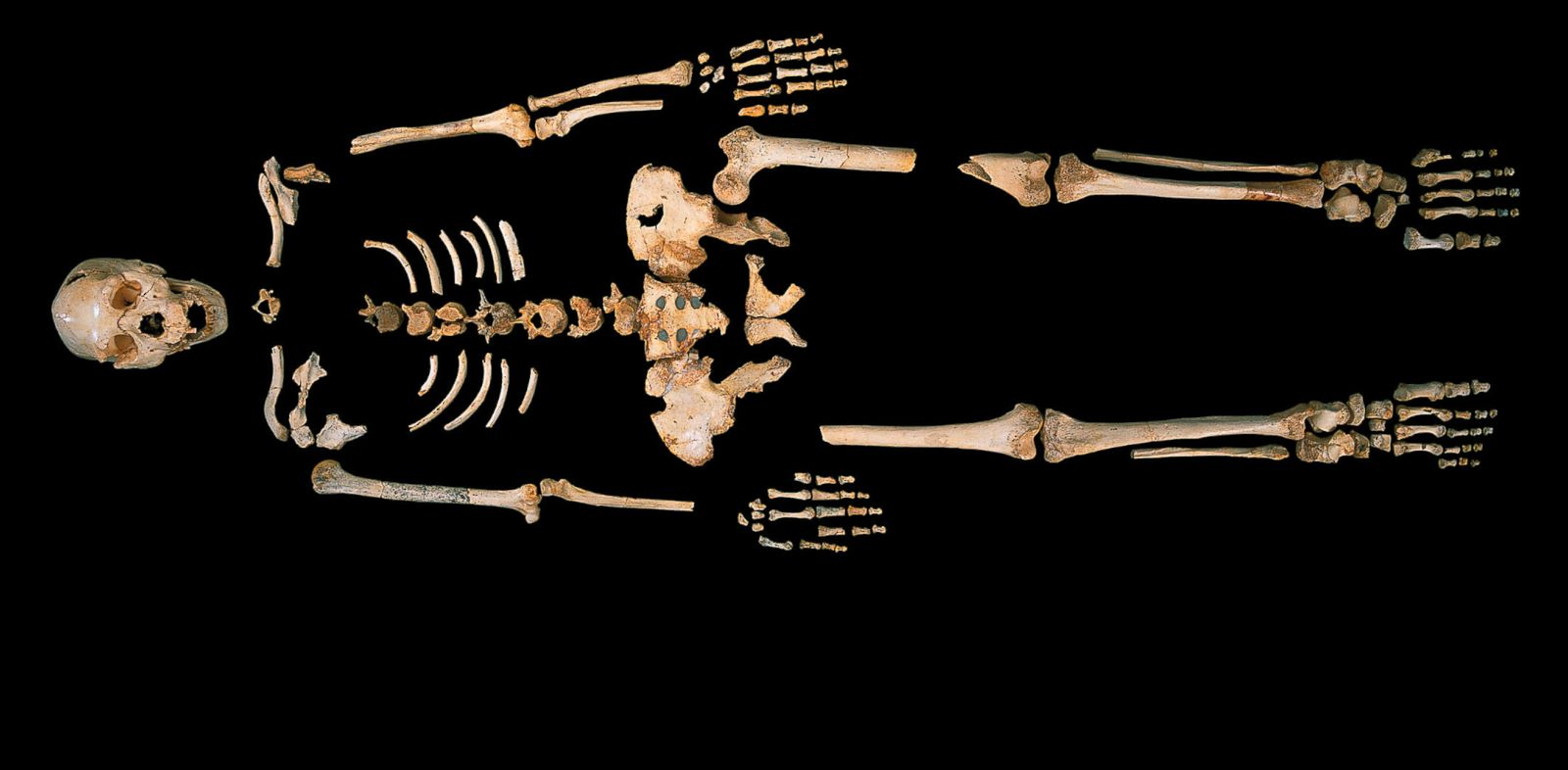 PHOTO: The skeleton of a Homo heidelbergensis from Sima de los Huesos, a unique cave site in Northern Spain.
